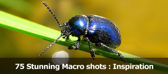 75 stunning macro shots by Mikhail Palinchak