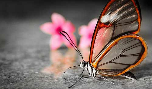 macro-photography-beautiful-photos-of-insects