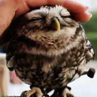 Videos: Lovely Cute OWL by Nura-T