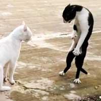 Stress Buster Series – Funny Cobra Cat [Video]