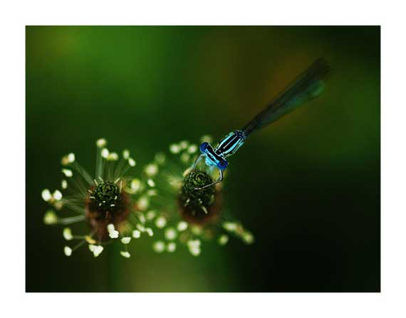 Best macro Photography examples