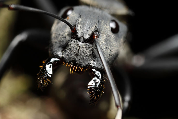 Chrysomelidae profile