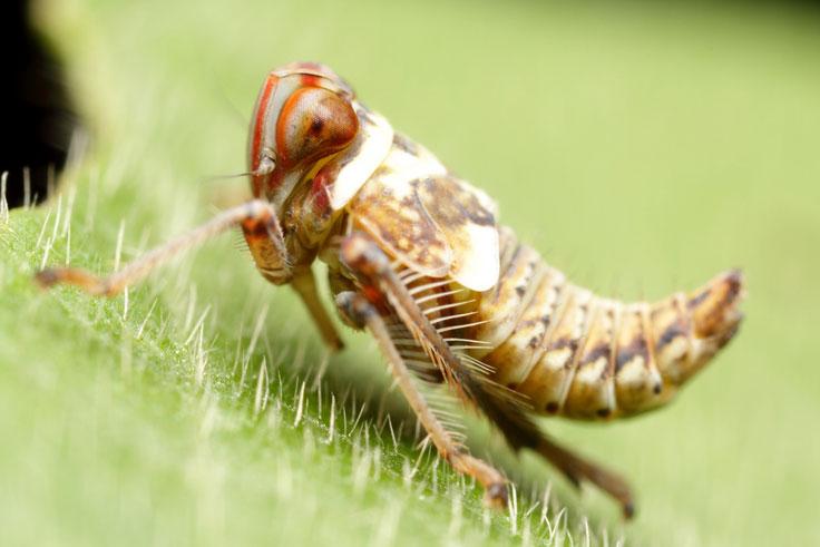 caterpillar_wide