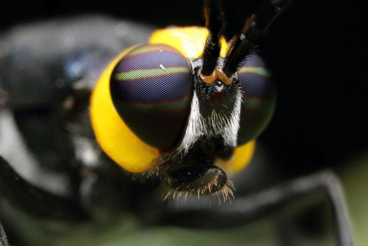 Caterpillar II
