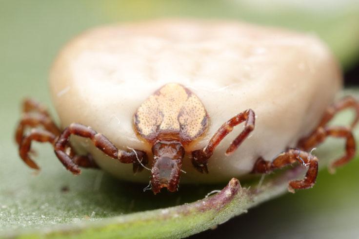 Beetle portrait