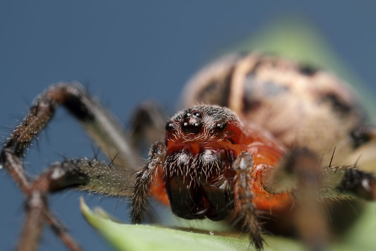 Crab spider vs hoverfly
