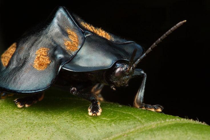 grasshopper_port