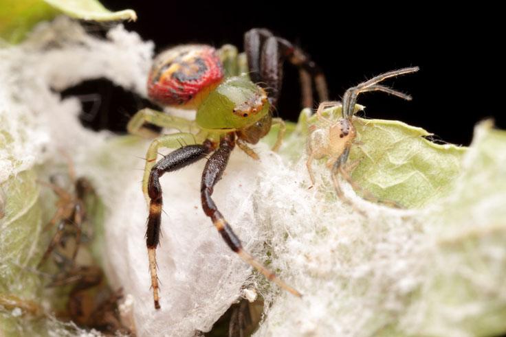 Longhorn beetle portrait