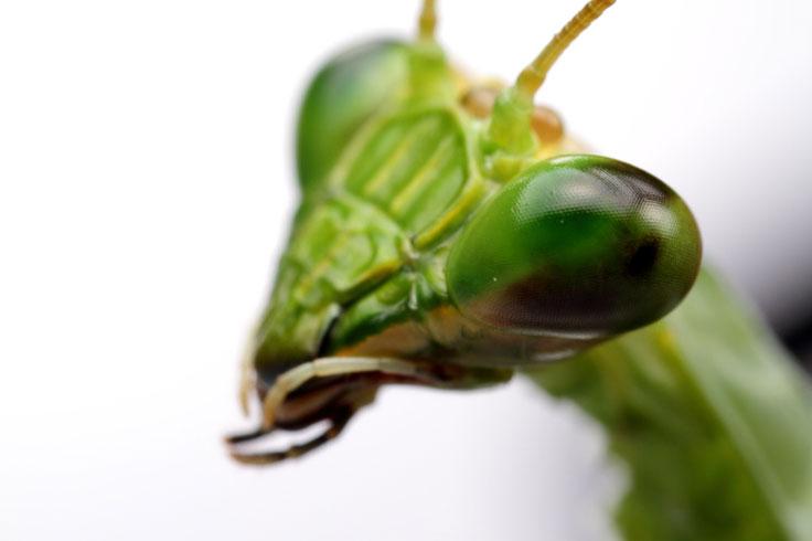 Inter species mating