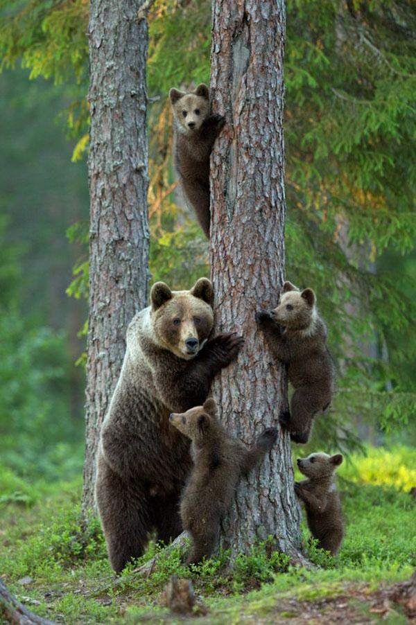 20 Random Photography of Wildlife (10)