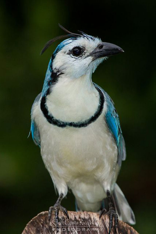 20 Random Photography of Wildlife (15)