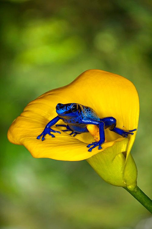 20 Random Photography of Wildlife (3)